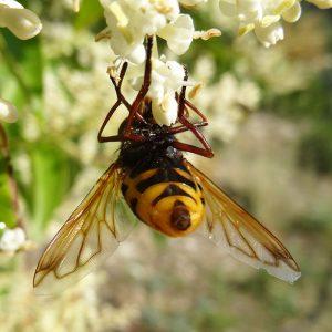 Encens répulsifs insectes